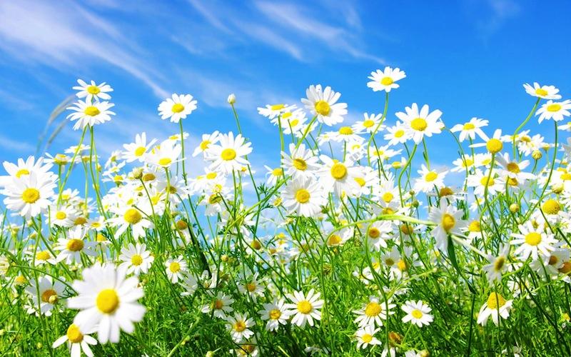 virtual14-salute-benessere-allergie-primaverili