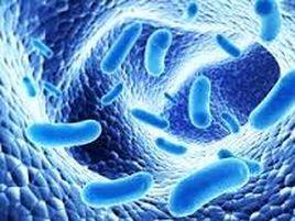 microbiota3
