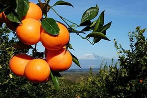 arance gruppo